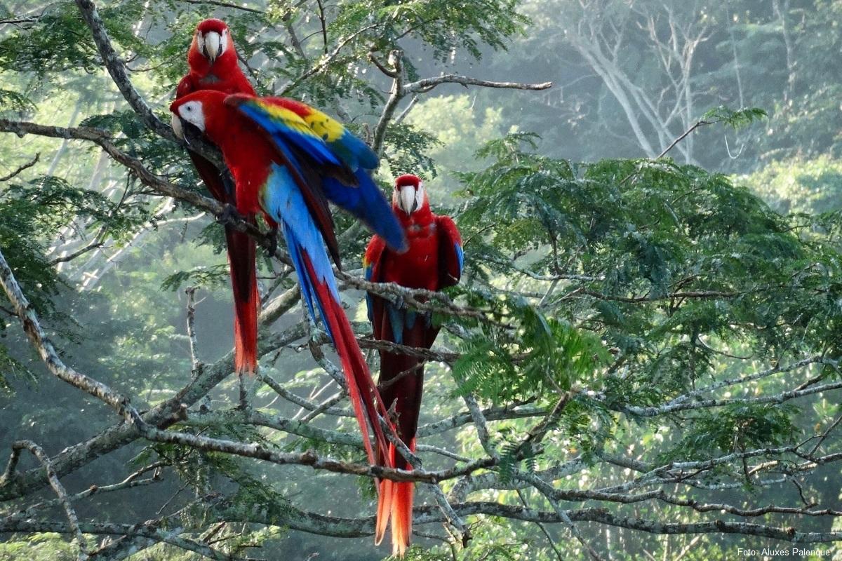 Las 7 Cosas que Debes de Hacer en Palenque