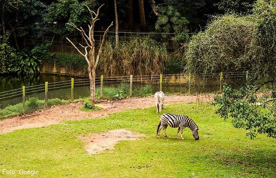 Los 6 Mejores Zoológicos de México